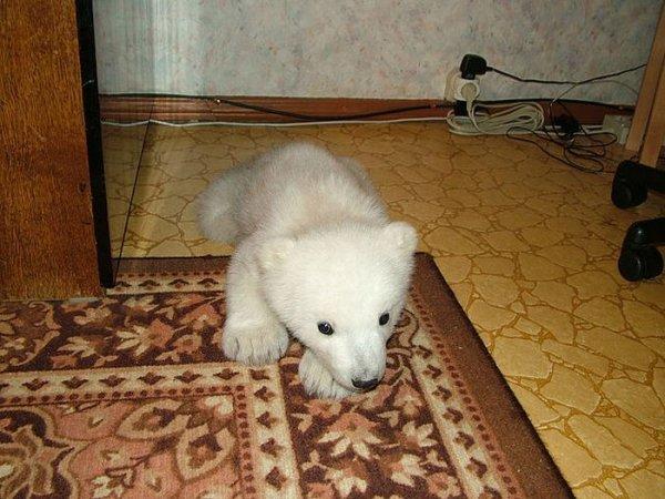 Медведь дома - только в России