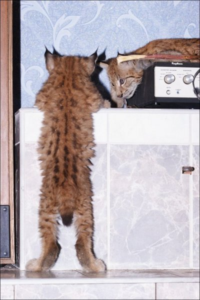 Домашний зверинец в городской квартире