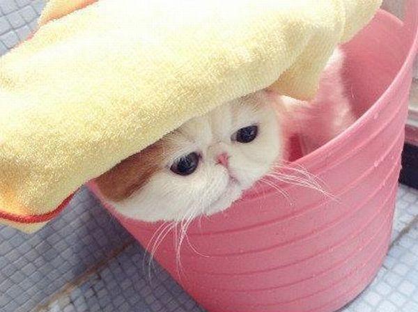 Невероятный котенок и водные процедуры