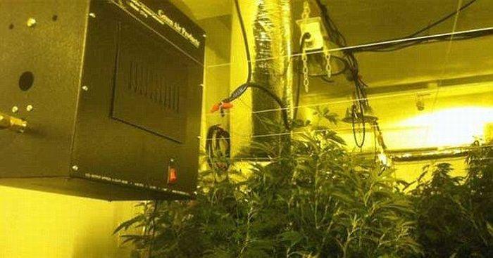 Выращивание марихуаны в Бронксе- научный подход