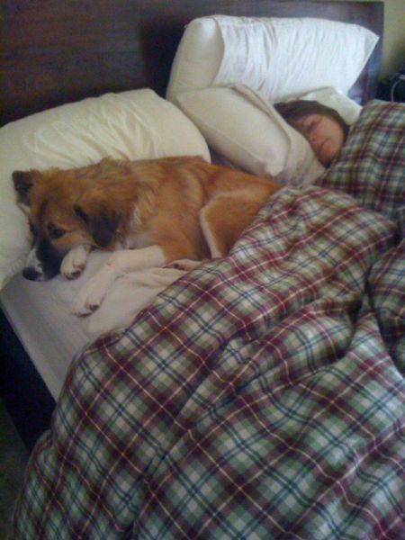 Как спит пес?