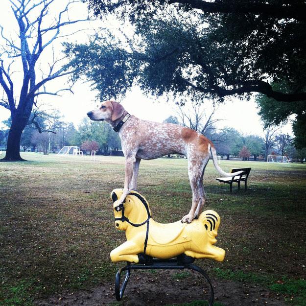 Собака-стояка