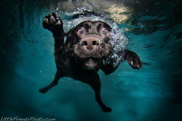 Собаки в воду-ныряки