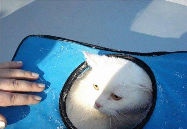 Отважные девушки спасли кота