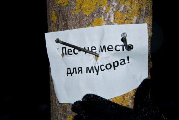Противники строительства домов для милиции нашпиговали гвоздями 40 деревьев в Уручье