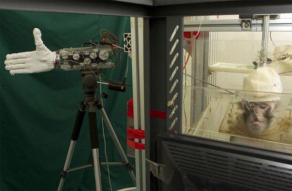 Прототип первой обезьяны - киборга