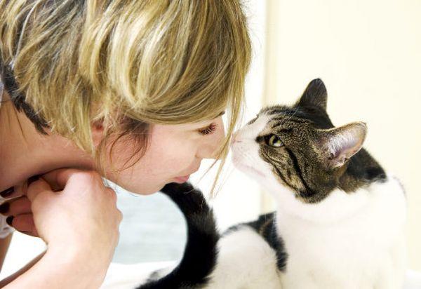 отличают ли коты запах хозяина сделать красочные