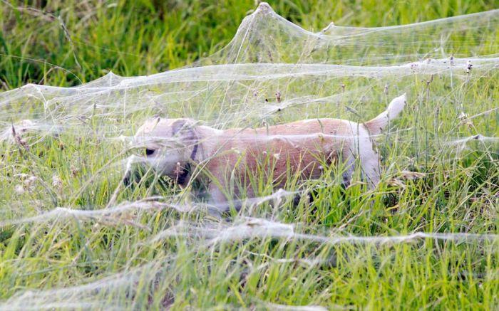 Кто боится пауков?