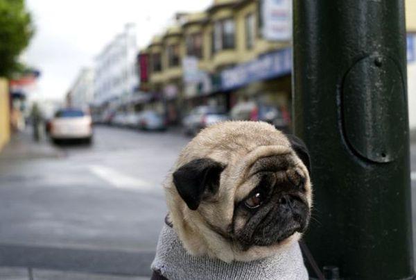 Очень грустные собаки