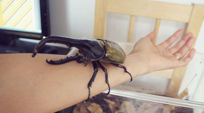 Жил-был жук