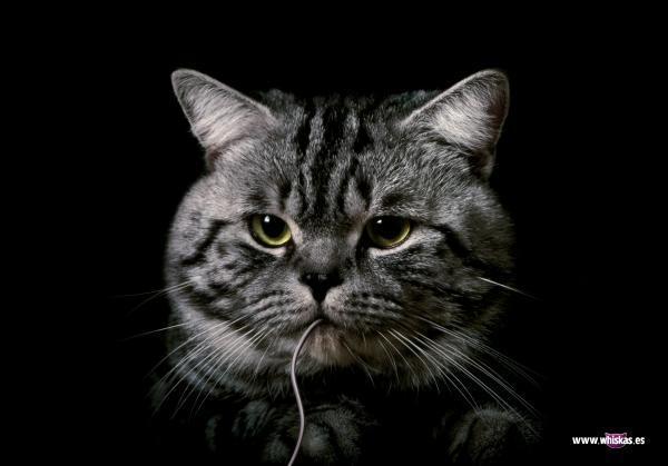 Коты в рекламе