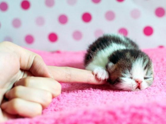 20 самых умильных котят