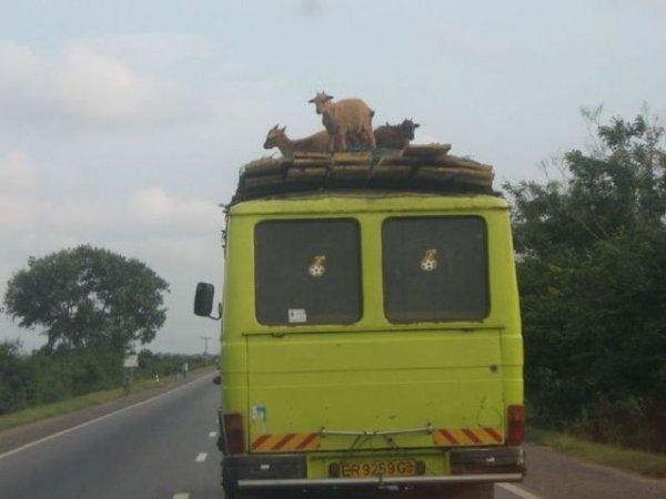 Приколы из Африки