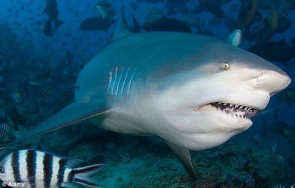 Австралийский серфер выжил после нападения акулы!