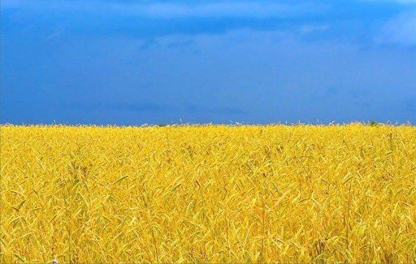 54 признаков, которые появляются у туриста, если он долго находится на Украине