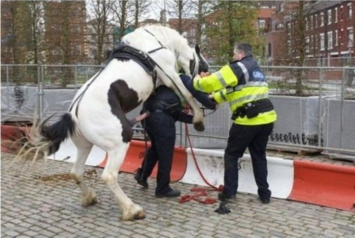 """������������ """"F*ck the police"""""""