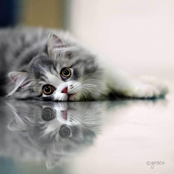 Профессиональные фотографии котов!