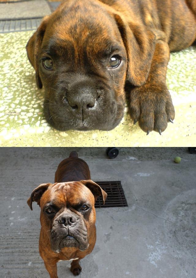 ... собака могла подрасти!