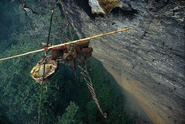 Как собирают мёд в Непале