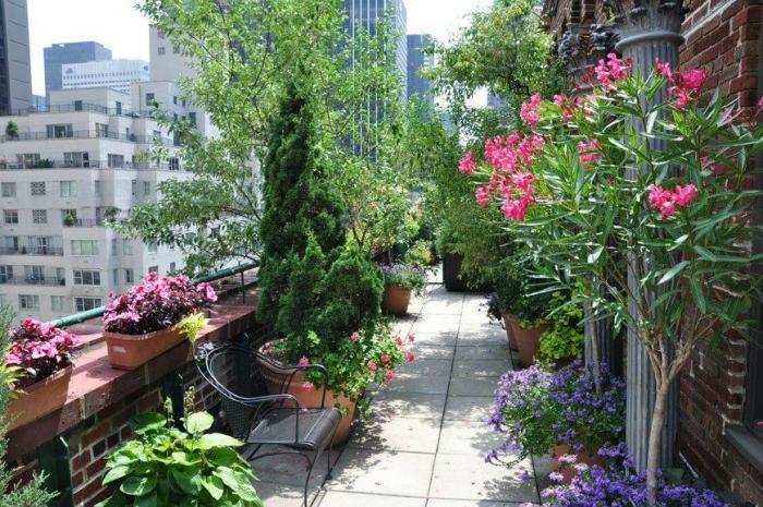 Шикарные сады на крышах