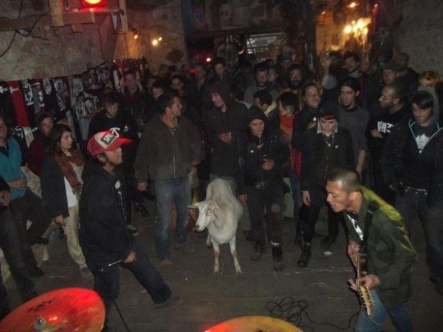 На панк-рок концерте странные зрители