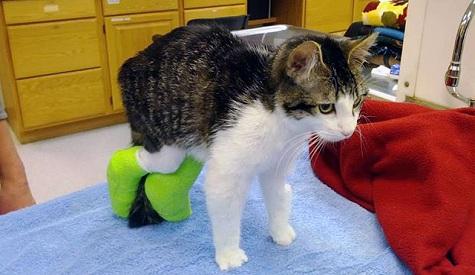 А за ними кот, задом-наперед!