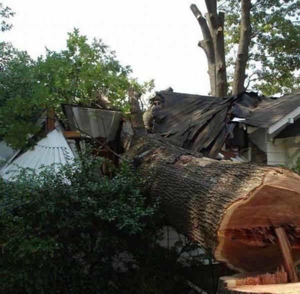 Мужик пилит дерево