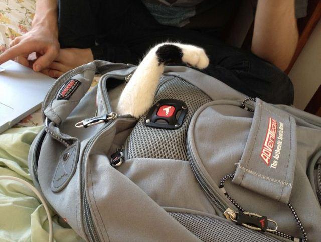 Монстр в рюкзаке