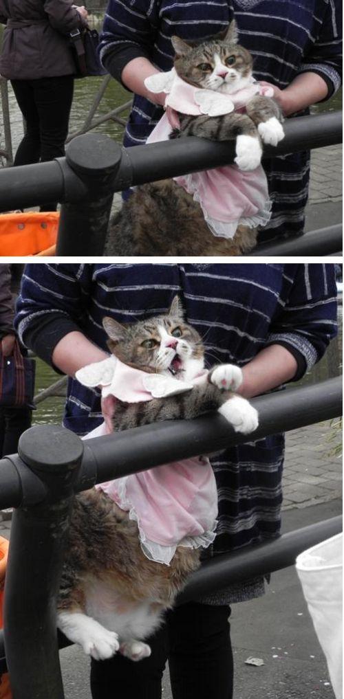 Коты прекрасны!
