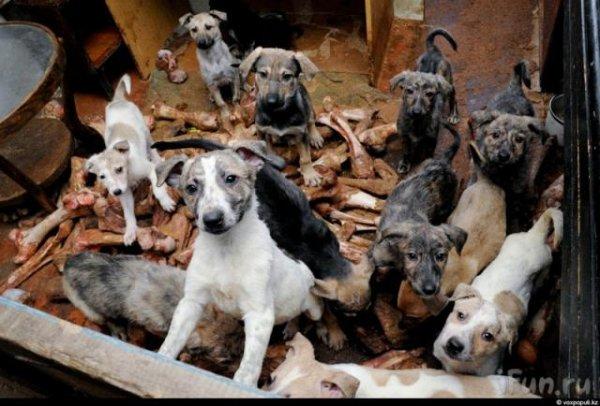 50 собак в одном доме