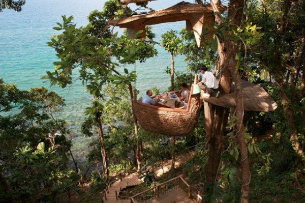 Пообедать на дереве