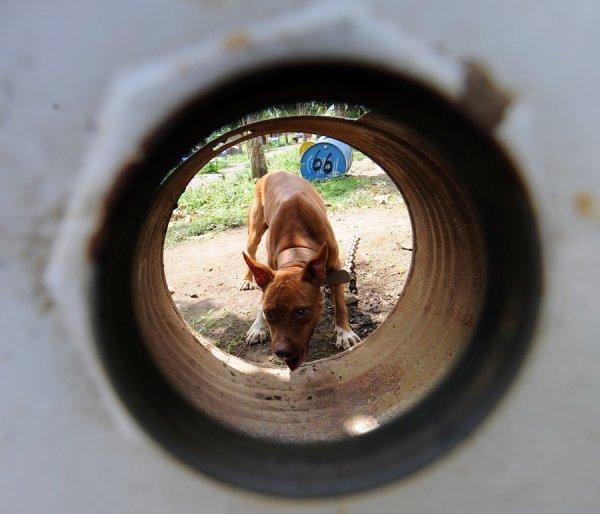 Концлагерь для собак