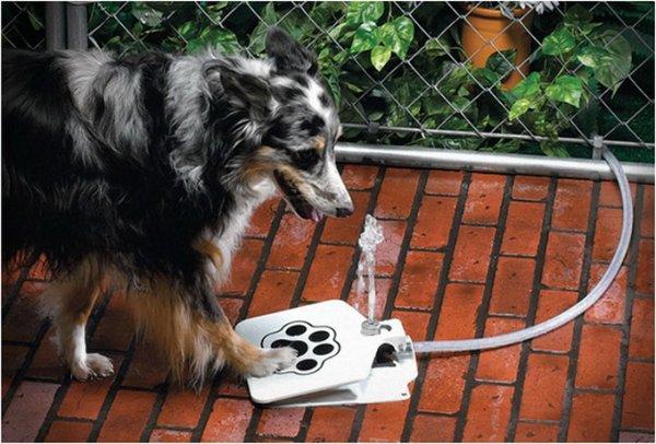 Собачий фонтан