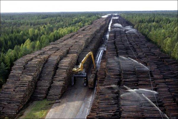Самый большой в мире склад леса