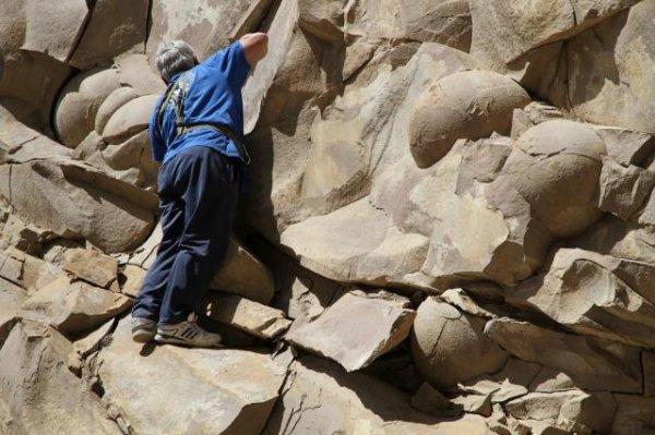 В Чечне найдены яйца динозавров