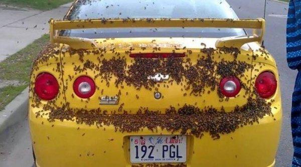Пчелы атакуют Шевроле