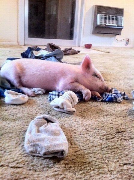Кто раскидывает одежду по полу?