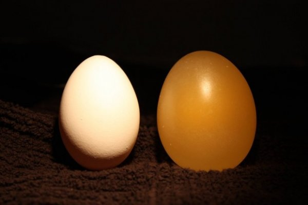 Удивительный эксперимент с яйцом и уксусом
