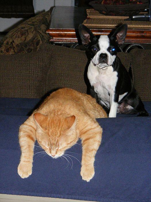 Коты с бодуна