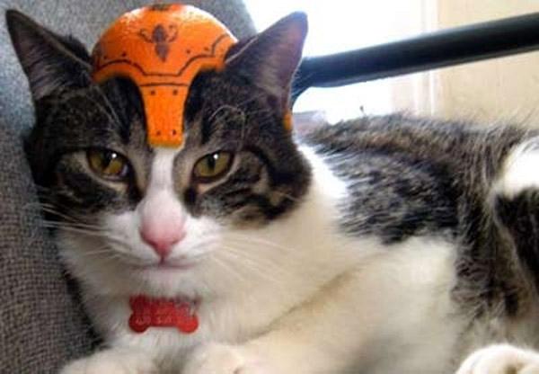 Коты в фруктовых шлемах