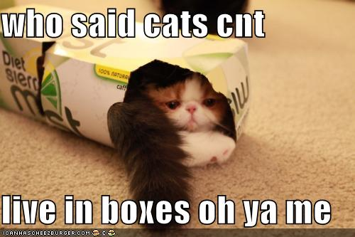 Коту рай в коробке