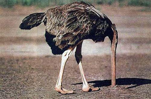 Сто тысяч страусов и перепелов заживо похоронили в Липецкой области