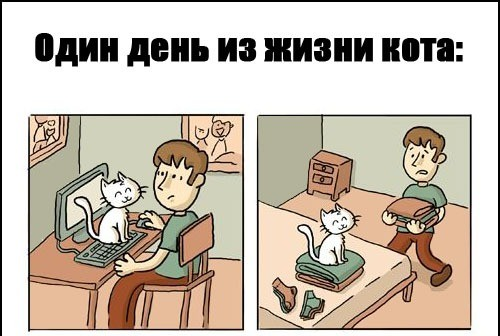 Всё для котов?!