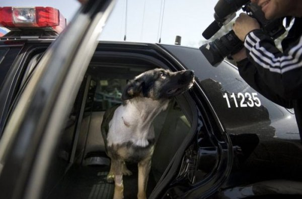 Офицер полиции ранен!