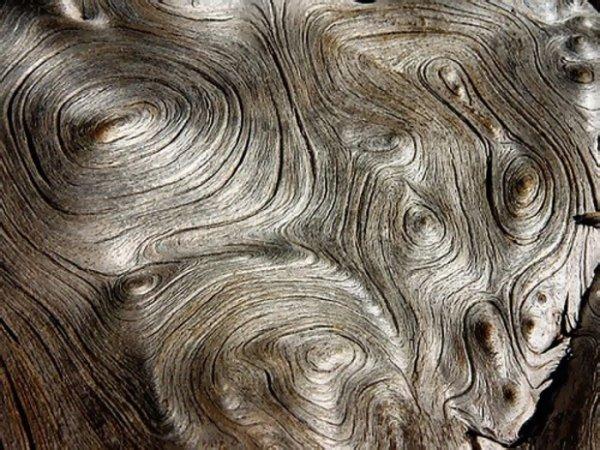 Ученые изобрели жидкую древесину