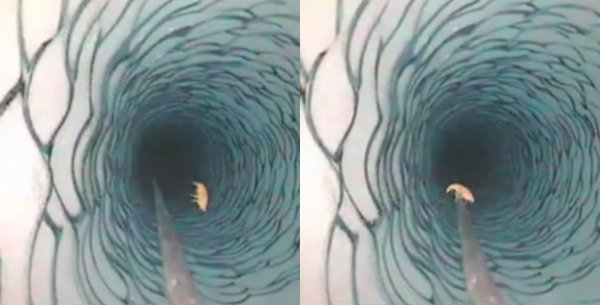 Подо льдом Антарктики обнаружена неожиданная форма жизни