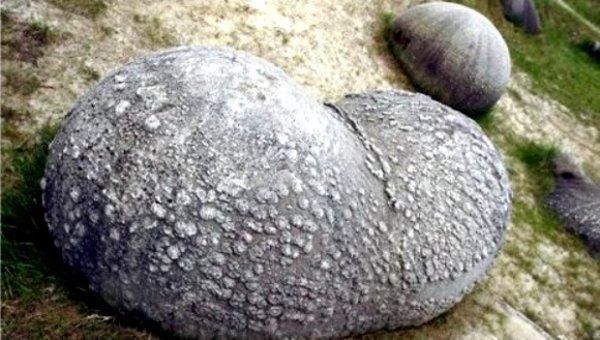 Живые камни, которые растут и размножаются