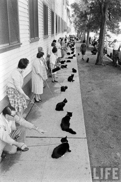Загадка про черных котов