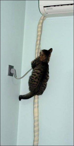 Коты спасаются от жары
