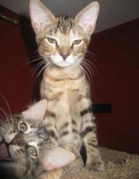 Фотобомбы с животными!